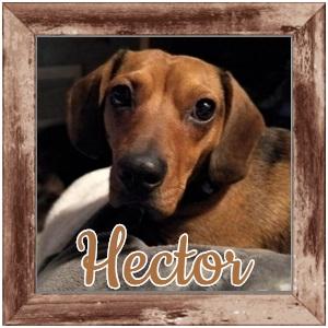 Hector FP Photo