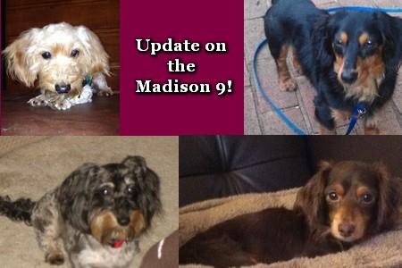 Madison 9