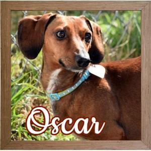 Oscar FP 3 Photo