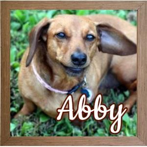 Abby NJ FP Photo