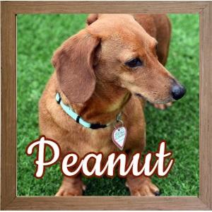Peanut FP Photo