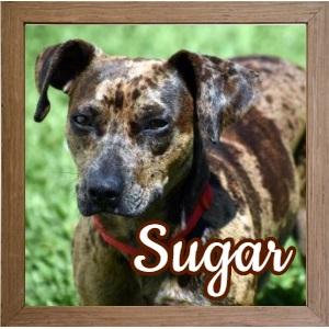 Sugar_FP Photo