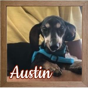 Austin FP Photo