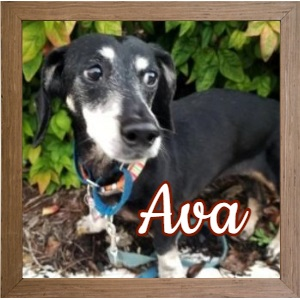 Ava in NC_FP Photo
