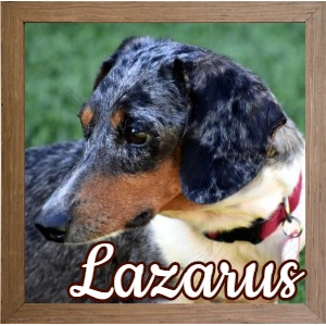 Lazarus FP Photo