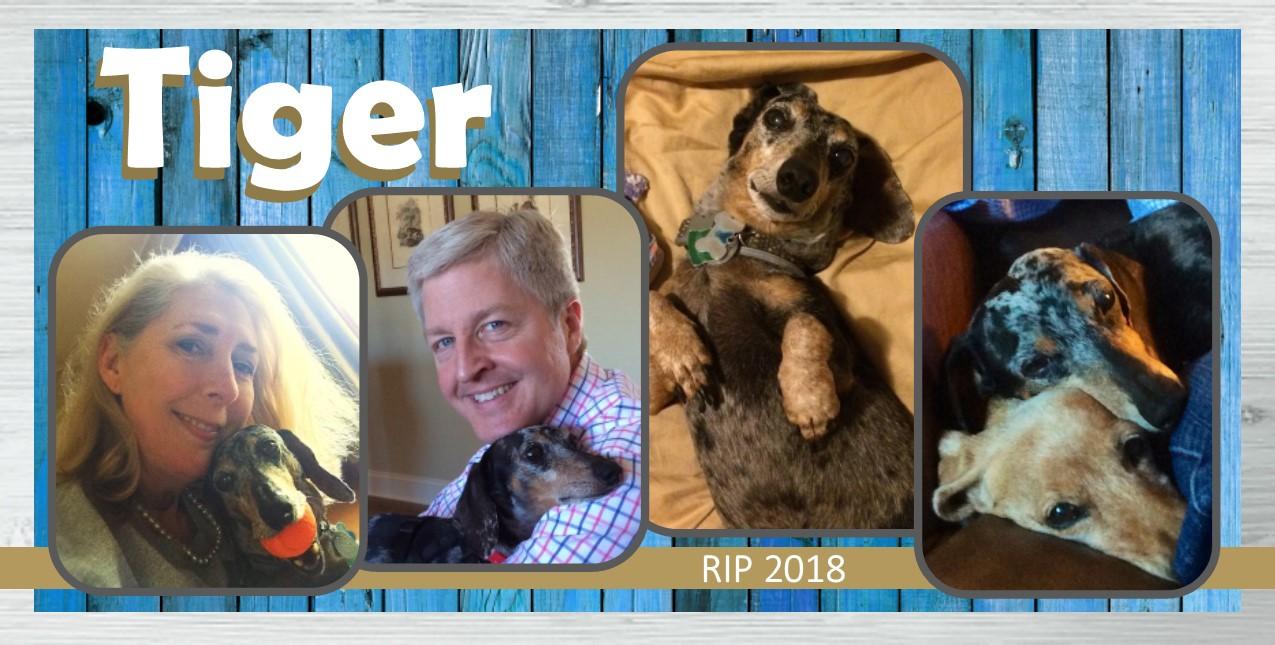 Tiger Patterson in Memoriam 2018