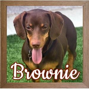 Brownie FP Photo