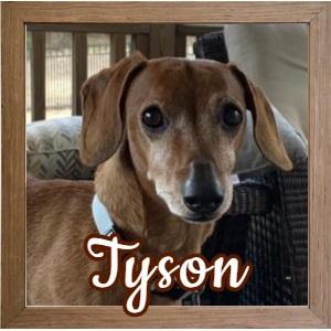Tyson FP Photo