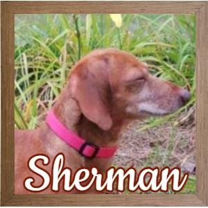 Sherman_FP Photo