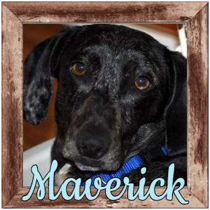 Maverick FP