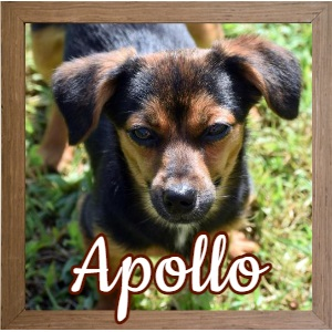 Apollo FP_Photo
