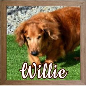 Willie FP Banner