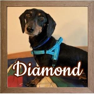 Diamond_FP Photo