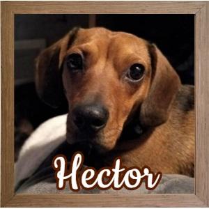 Hector FP Photo 2