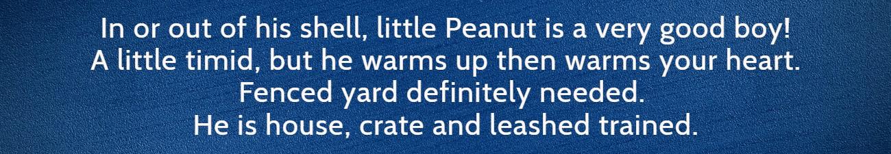 Peanut FP Banner 2
