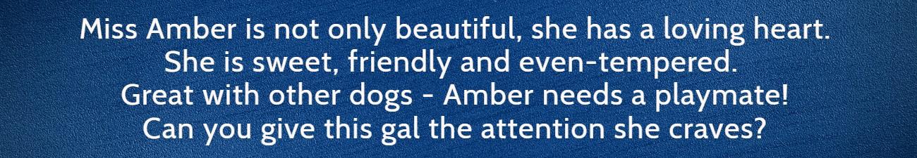 Amber FP Banner