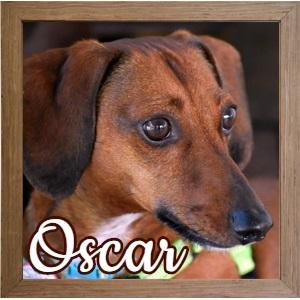 Oscar_FP Photo 2