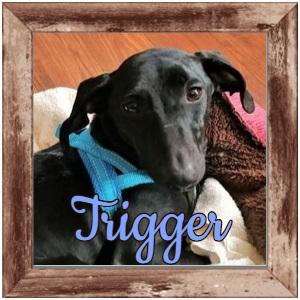 Trigger FP Photo 2
