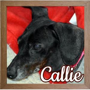 Callie FP Photo