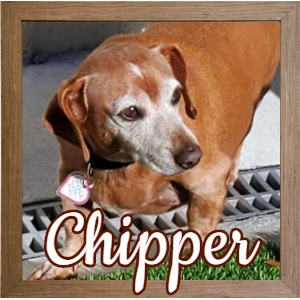 Chipper FP Photo