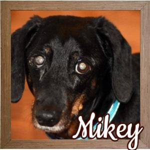 Mikey FP Photo B