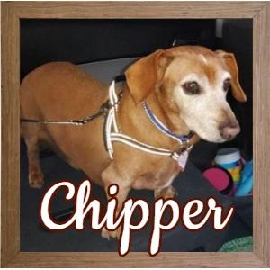 Chipper FP 2 Photo