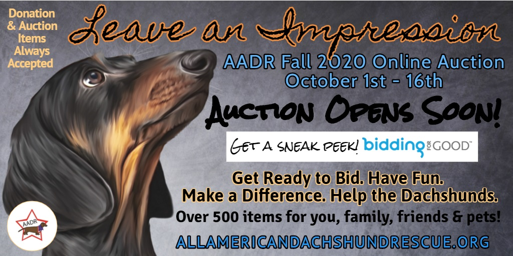2020 Fall Auction Starts Soon