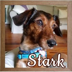 Stark FP Photo