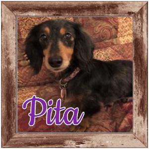 Pita Photo