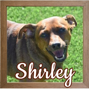 Shirley FP Photo