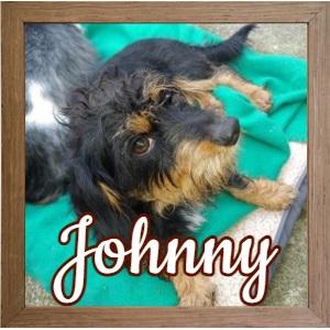 Johnny TN_FP Photo