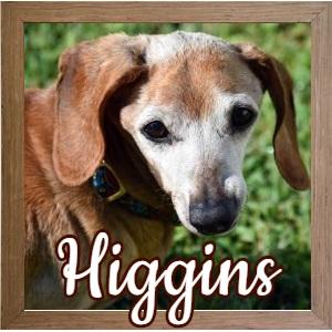 Higgins FP Photo