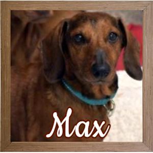 Max FP Photo 2