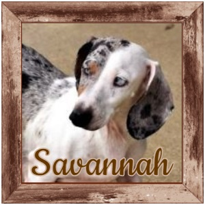 Savannah FP Photo