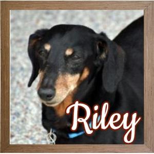 Riley FP Photo