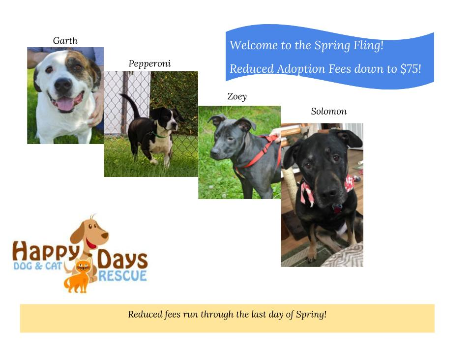 Happy Days Dog And Cat Rescue Livonia
