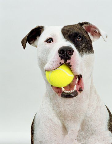 Pit with Ball