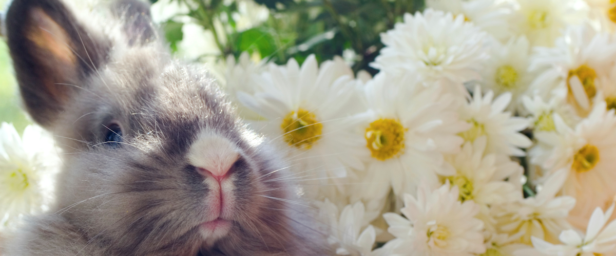 Welcome To Friends of Rabbits