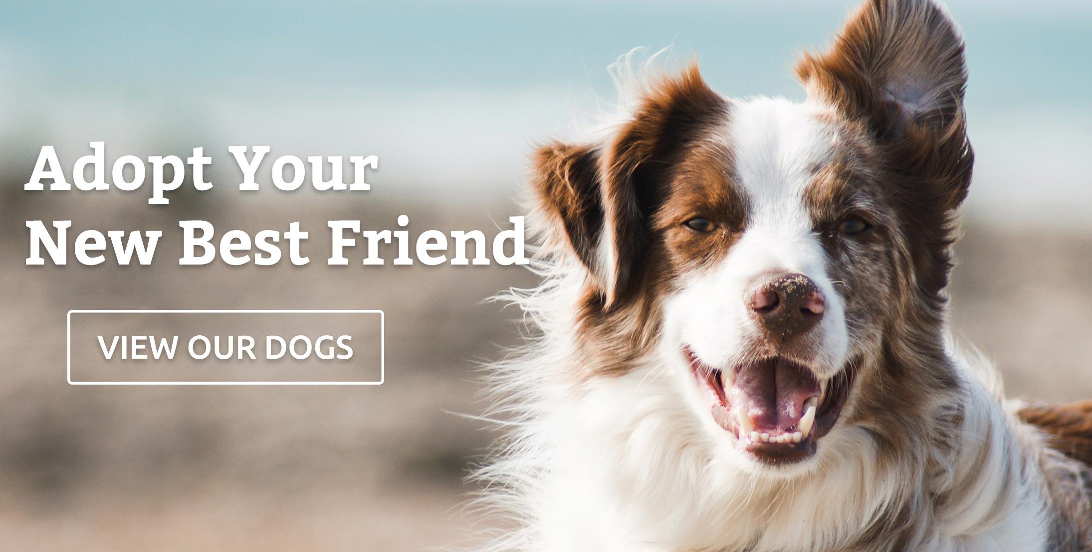 Adopt your new best friend