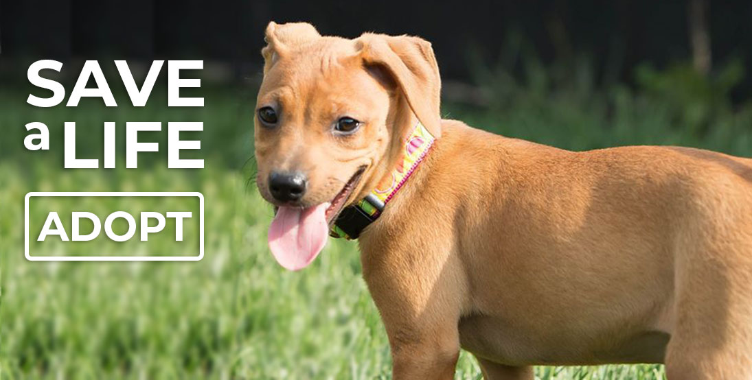 Save a life - adopt! Click to filll out an adoption application
