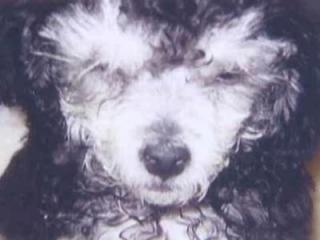 puppymill3