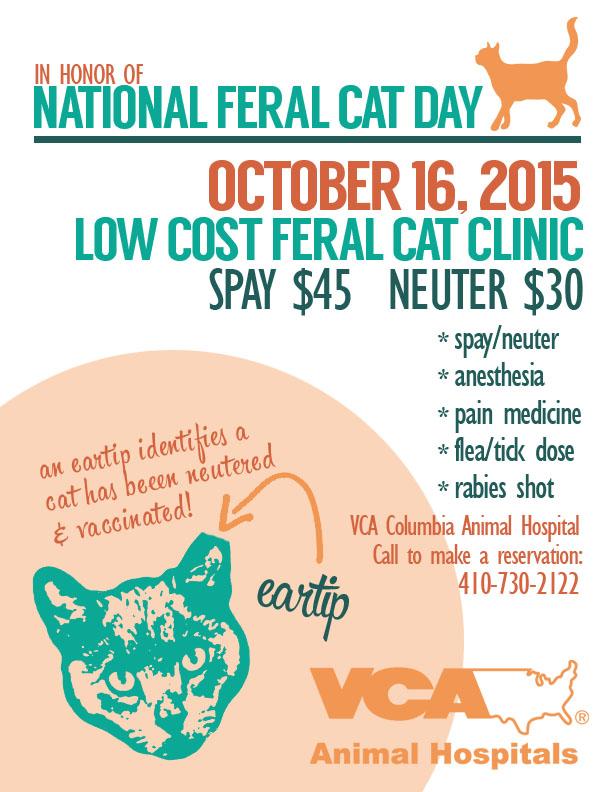 VCA Feral Cat Day 2015
