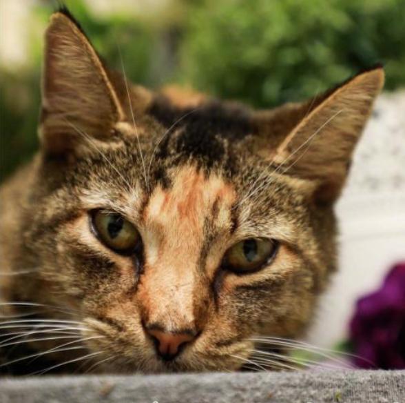 Catsnap | Champaign Area Trap / Spay / Neuter and Adoption
