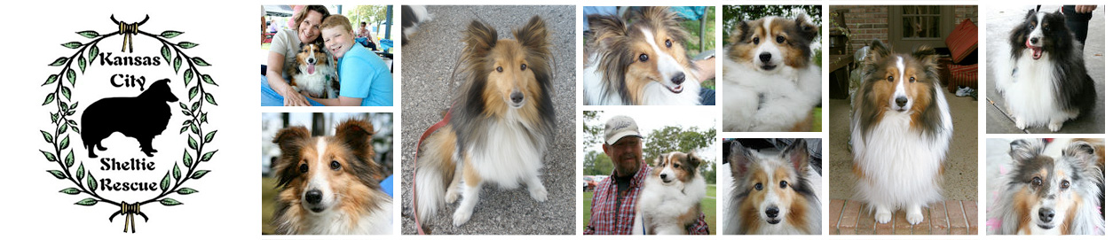 Kansas City Sheltie Rescue