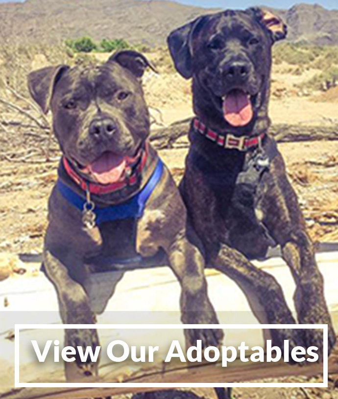 View our Adoptables