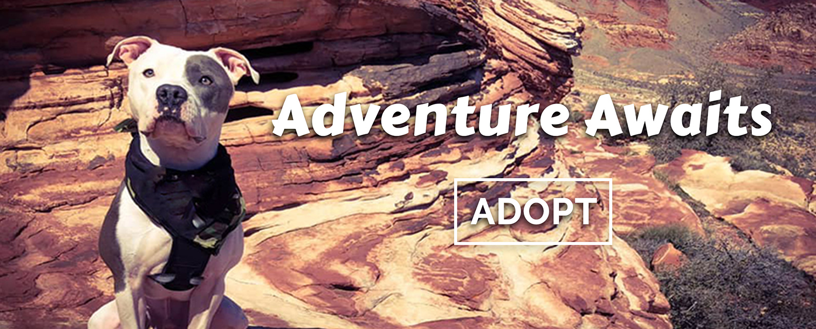 Adventure Awaits - ADOPT