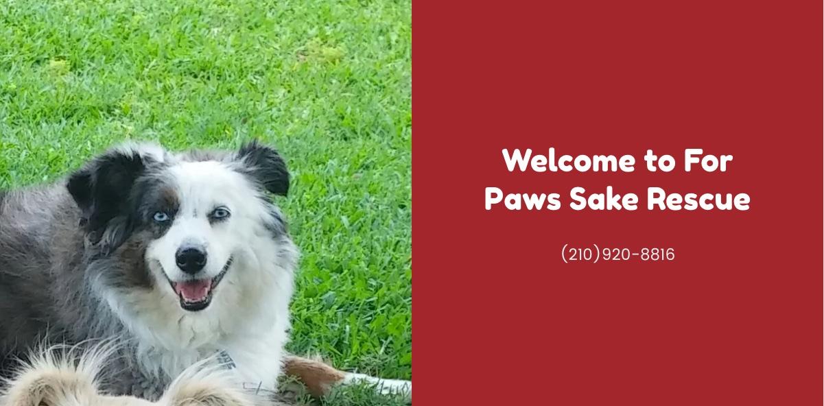 San Antonio Texas Rescue Dogs