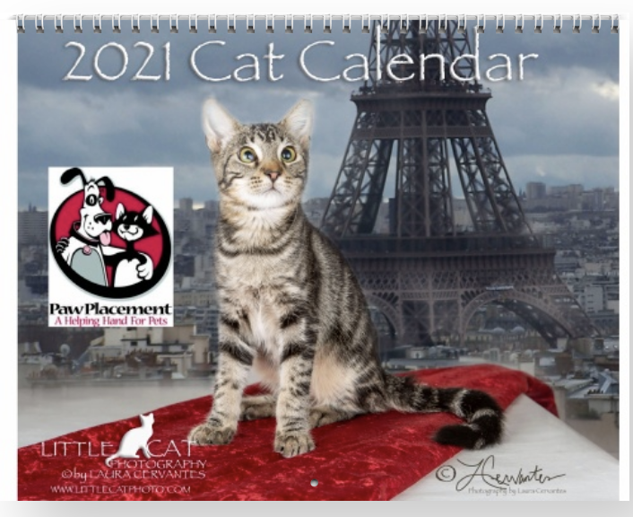2021 Cat Calendar by Laura Cervates