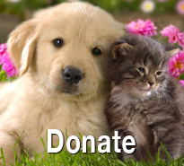Donate to PawPlacement