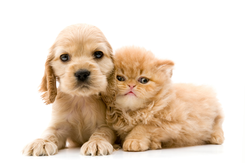 Adopt a kitten or puppy from Paw Placement